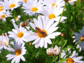 約60種類の花粉